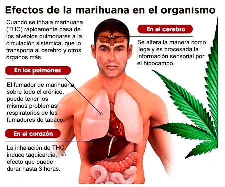 El mundo en línea marihuana efectos dañinos