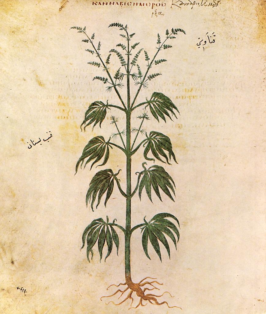 El mundo en línea marihuana efectos en la historia