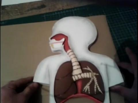 El mundo en línea maqueta completa sistema respiratorio