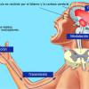Fisiopatología del dolor – Estructura y funcionamiento