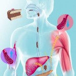 El yogurt engorda sistema metabólico