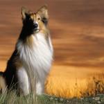 el mundo en línea nombres de perros famosos