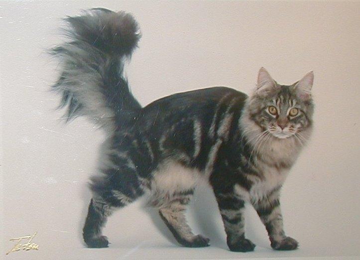 Mundo en línea nombres para gatos machos