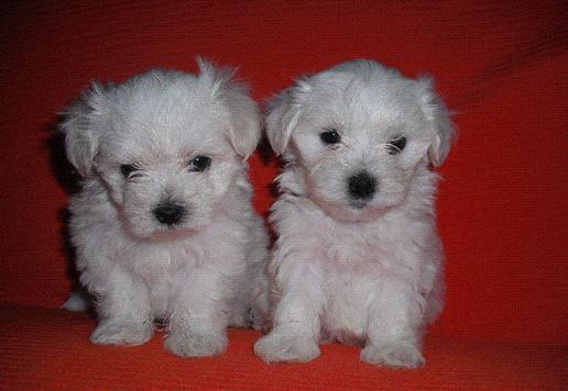 Nombres Para Perros Hembras Bonitos