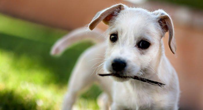 Mundo en línea nombres para perros pequeños
