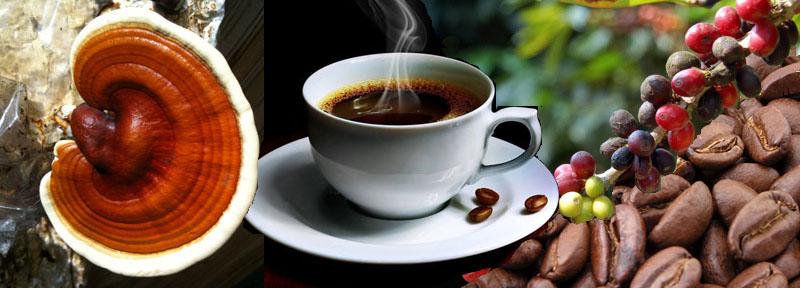 Ganoderma Lucidum café según los médicos