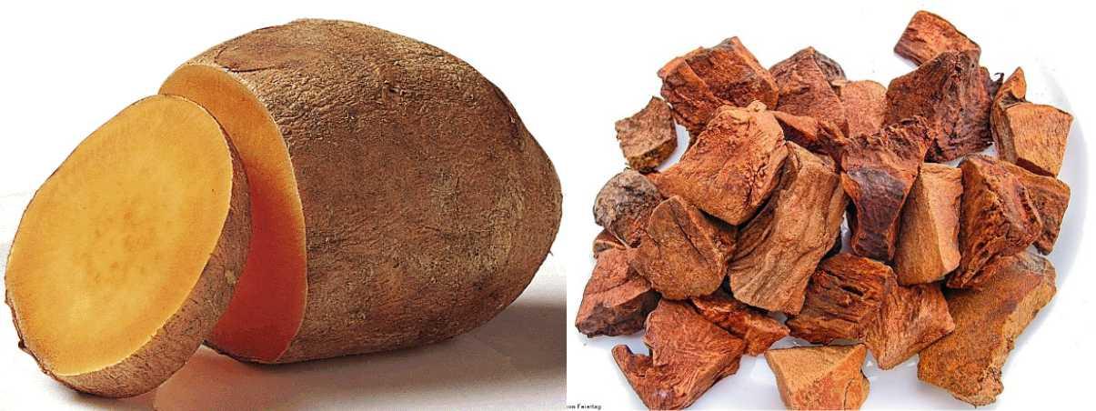 conozca las innumerables propiedades de la raíz de cocolmeca