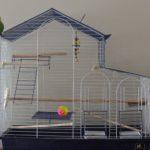 Como proteger el ave fuera de la jaula - Jaulas para periquitos