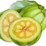 Que es lo mejor de consumir Garcinia cambogia - Donde comprar Garcinia cambogia, Garcinia cambogia opiniones