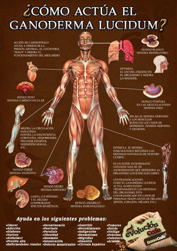Ganoderma lucidum efectos secundarios según los expertos