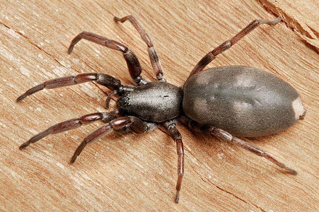 Veneno para arañas y Tipos de venenos para arañas