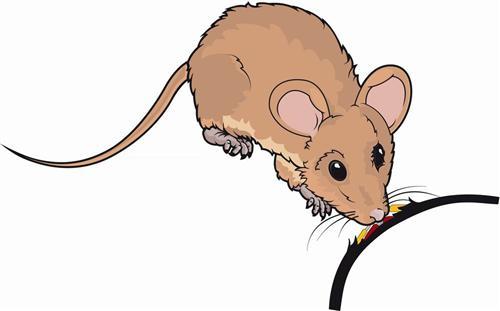 Veneno para ratas que las seca